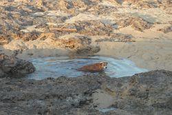 Harte Hunde gehen schon ab April ins Wasser